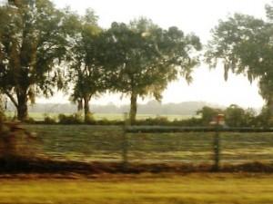 15 florida farm c