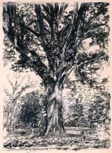 01 henry clay oak