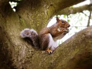 01 squirrel in tree