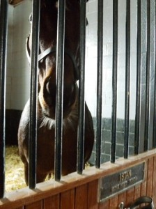 04 istan in stall
