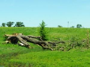 21 tree flattened
