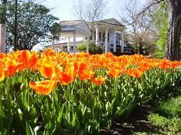 07 tulips