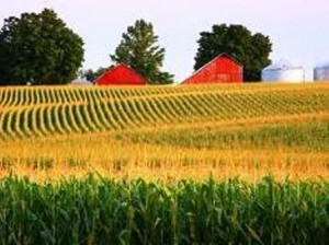 01 corn and red barn