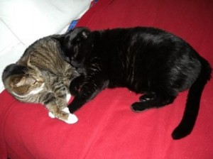 06 cats snuggled