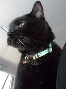 06 jack iowa cat