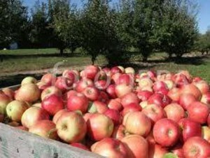03 apples
