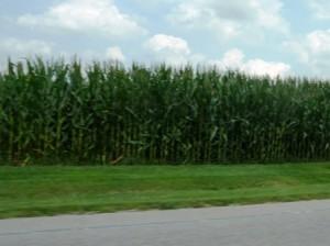 13 ohio corn