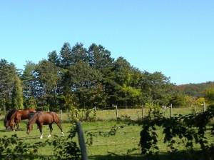 28 kenne horses