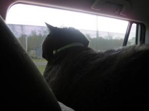 05 jack window car