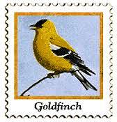 16 goldfinch