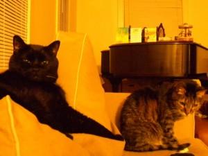 14 cats on sofa