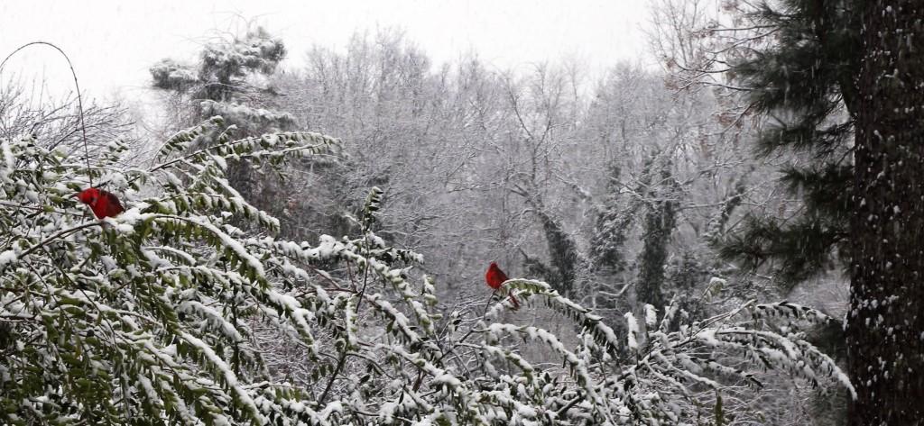 07 cardinals