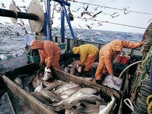 food cod fishermen