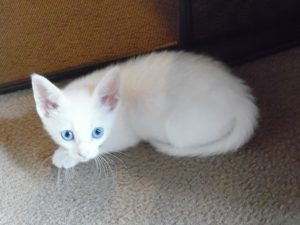 05-katy-blue-eyes