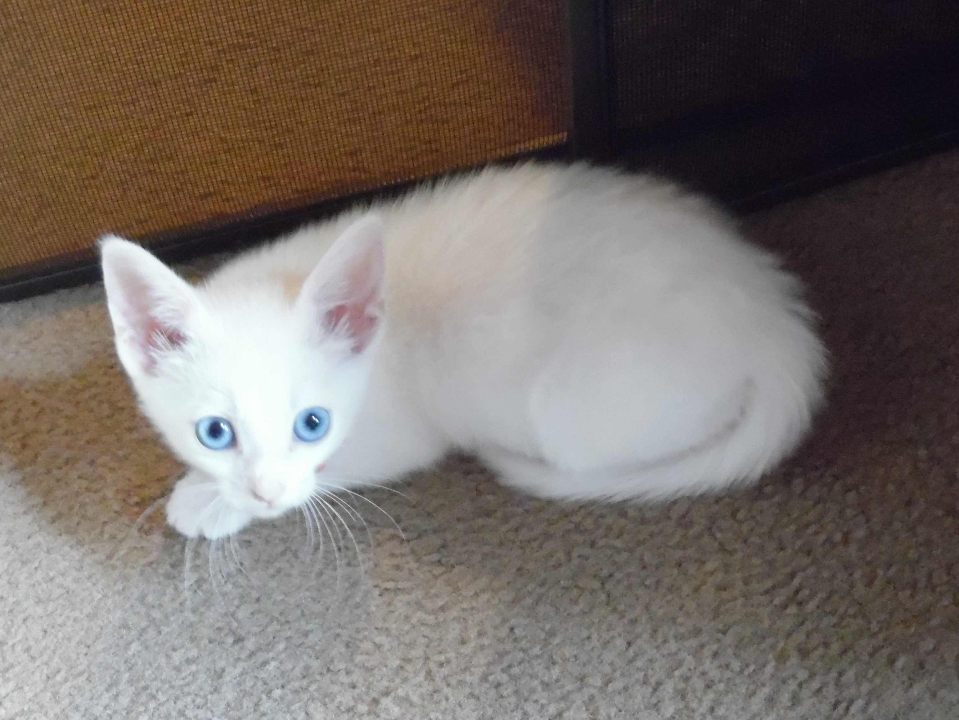 05-katy-blue-eyes