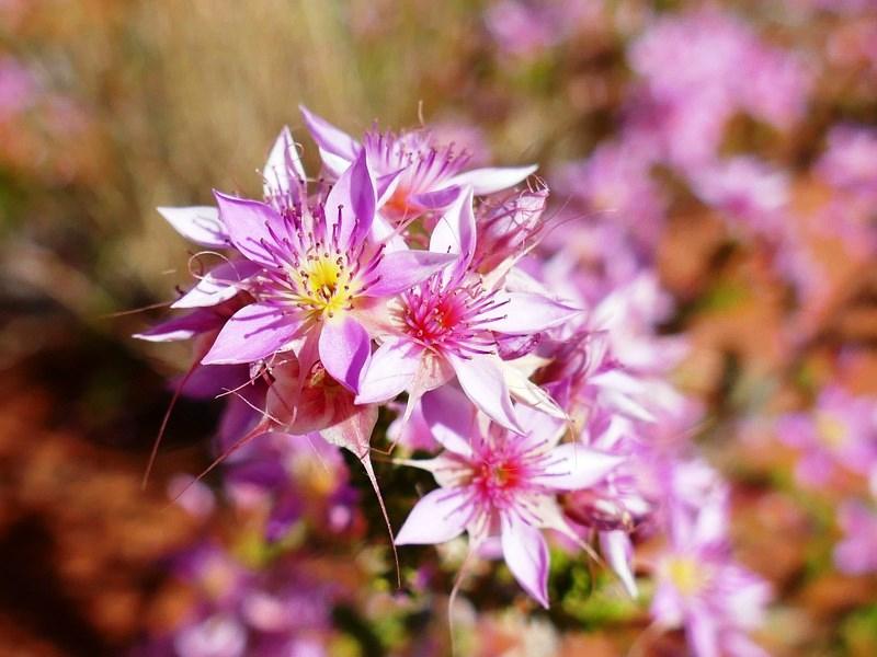 23.wildflowers 3