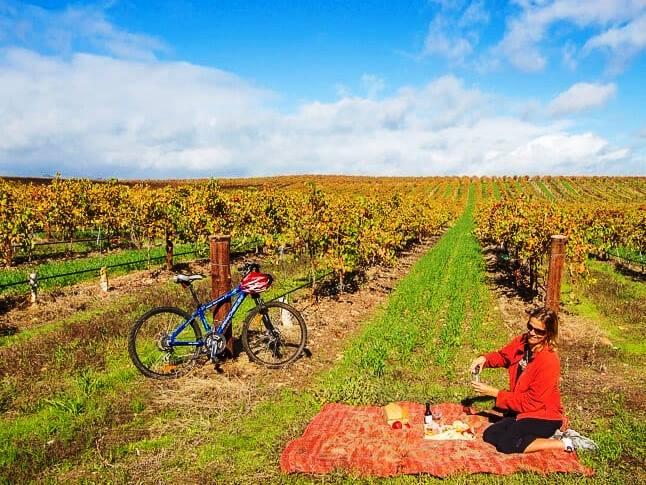 23.wine arbors SA
