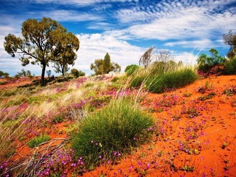25.arid landscape
