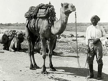 25.camel and man
