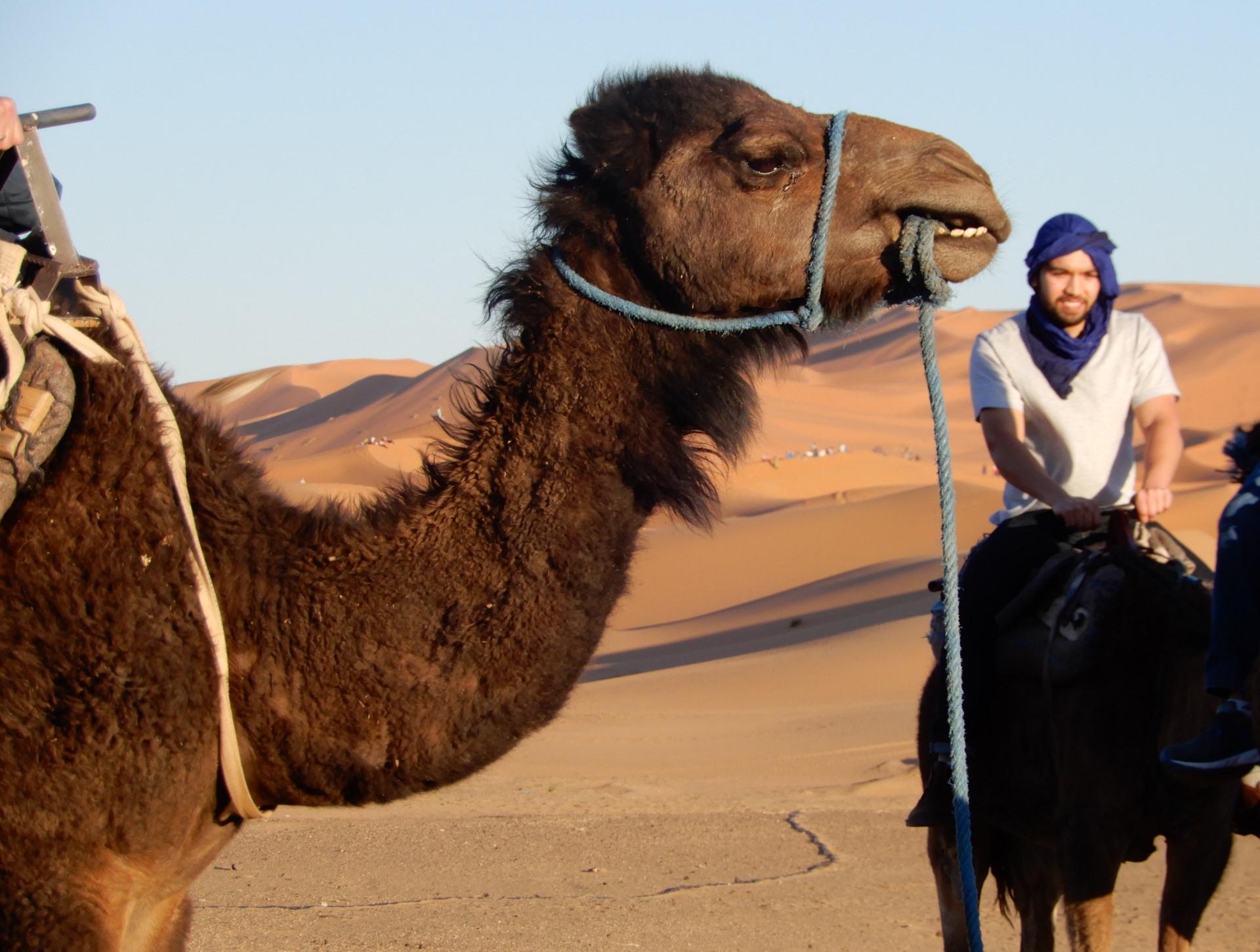Andrew Camel 2
