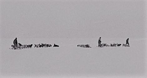 sled dogs.e